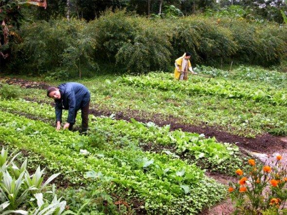 -14 SI (artigo - Alimentação) Além do Vegetarianismo (4000) (pm) (pn)13