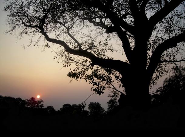 -16 (artigo - Caitanya e Associados) A Grande Fuga de Sanatana (2453) (ta)