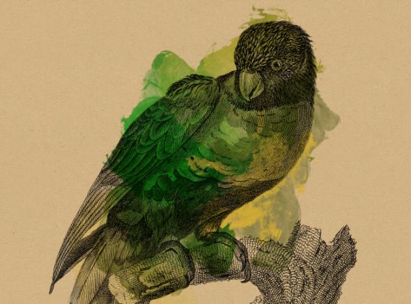 10 I (artigo - Mantra) Lições de um Papagaio (1307) (ta)