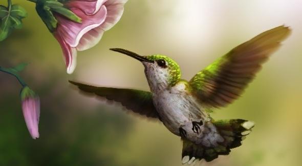 boindade beija flor