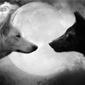 Os Dois Lobos no Coração chamada