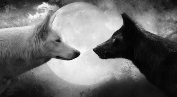 Os Dois Lobos no Coração